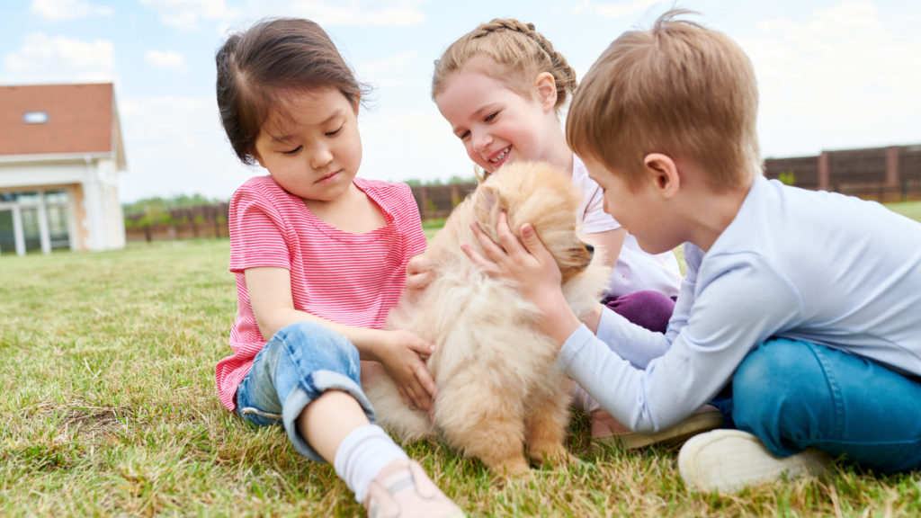 How to Adopt a Dog in South Africa